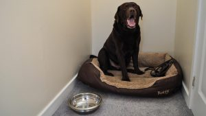 Pets are welcome at Cologin self-catering cottages & lodges near Oban