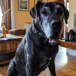 Pets are welcome in Cologin Farmhouse, self-catering near Oban